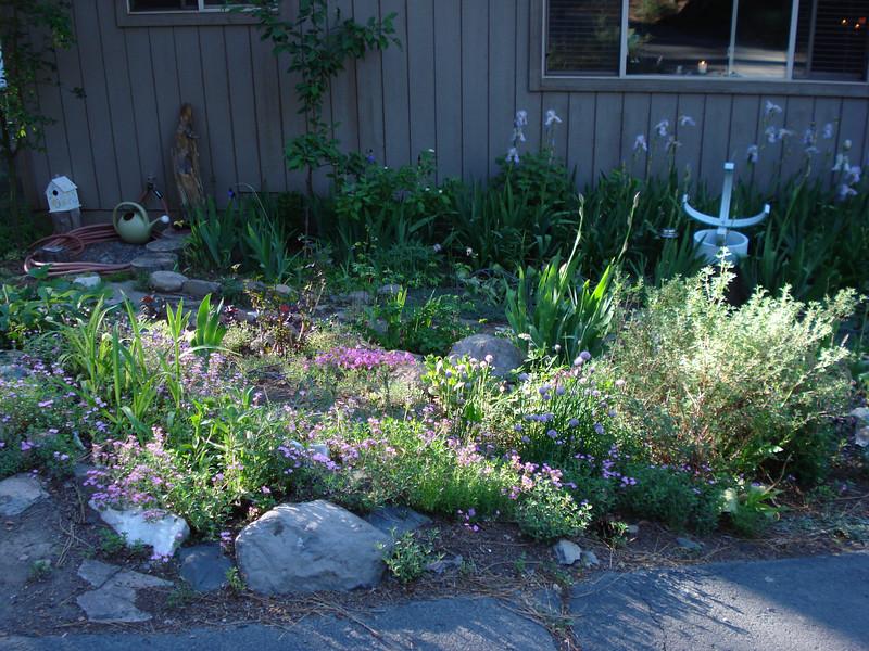 Front Garden 06-28-2010