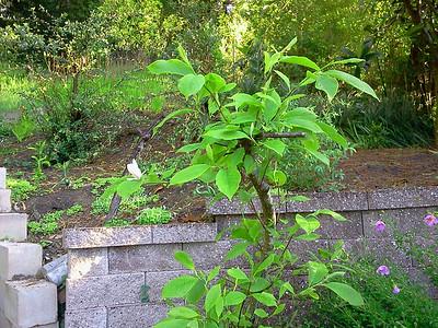 saroni back yard spring 2013