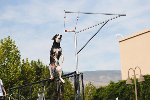 Splash Dogs 2014 Nationals 9-20-14