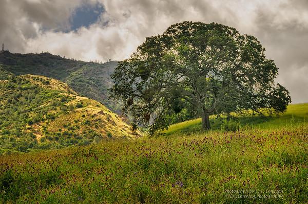 Mt. Diablo Spring Scenery