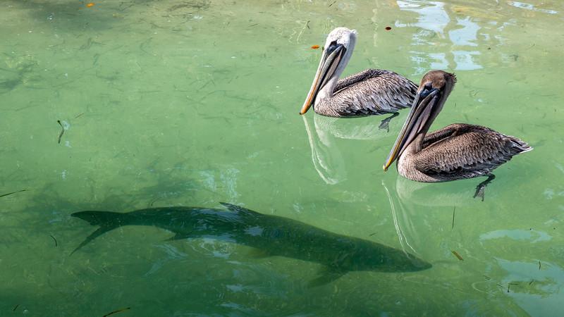 Florida-Keys-Islamorada-Robbies-Marina-Sundance-Waterspots-Parasailing-08.jpg