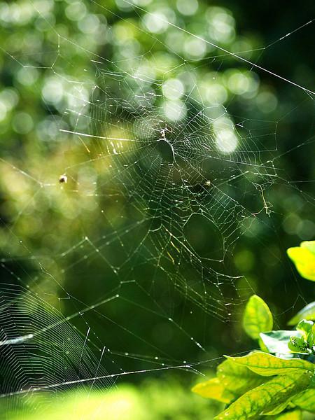 Web in Maui, Hawaii