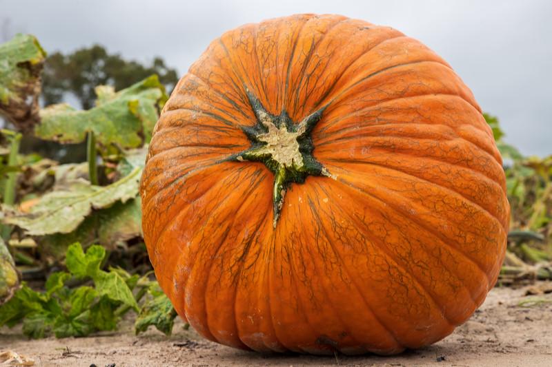Pumpkin-001
