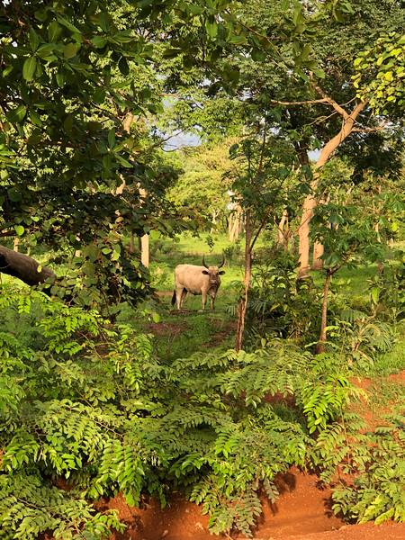 Guinea-106.jpg