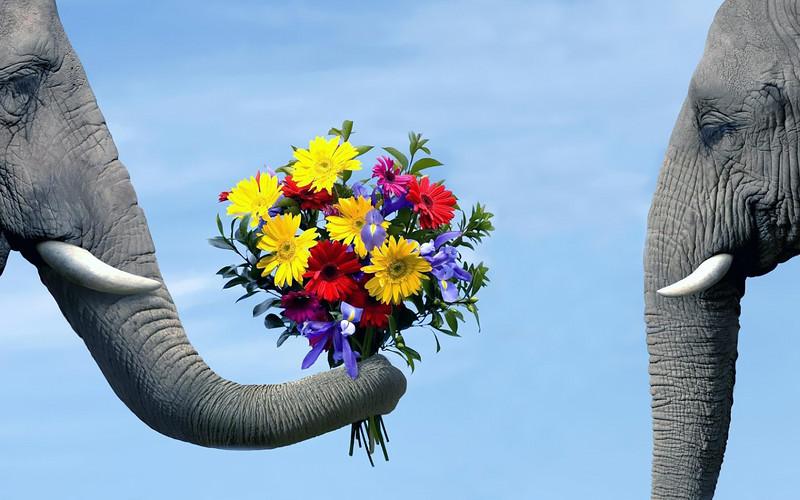 Funny-Elephants-24.jpg