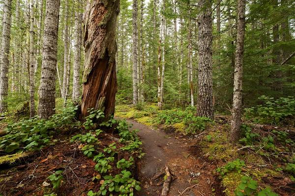 Kautz Creek Trail - Mt. Rainier National Park, January 28, 2014
