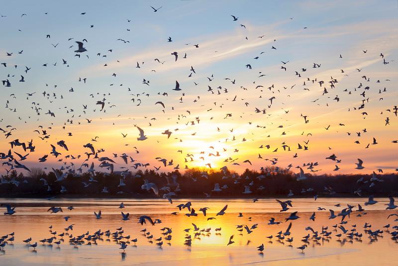 birdsbirdsbirds.jpg