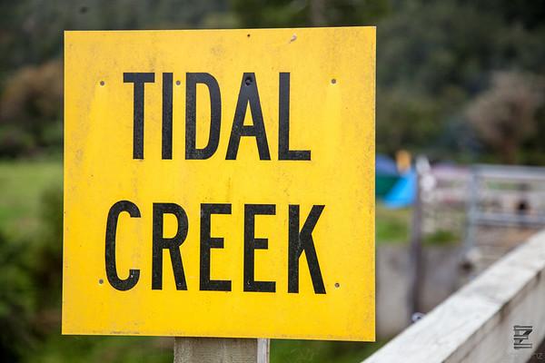 Tidal Creek 2018