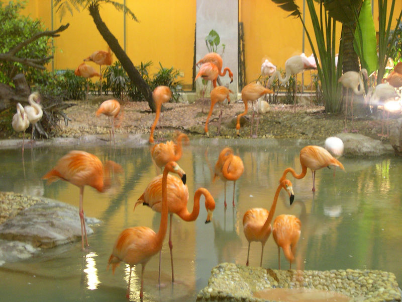 The Pink Flamingo courtyard (yes, they're real!)