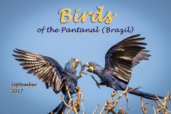 Birds of the Pantanal 2017