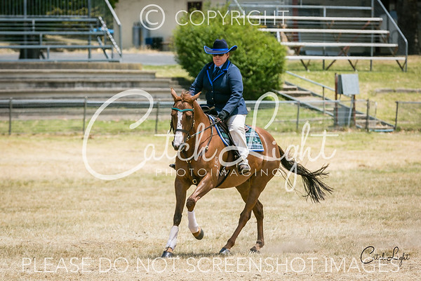 7 Working Mare 4yrs+ over 15hh
