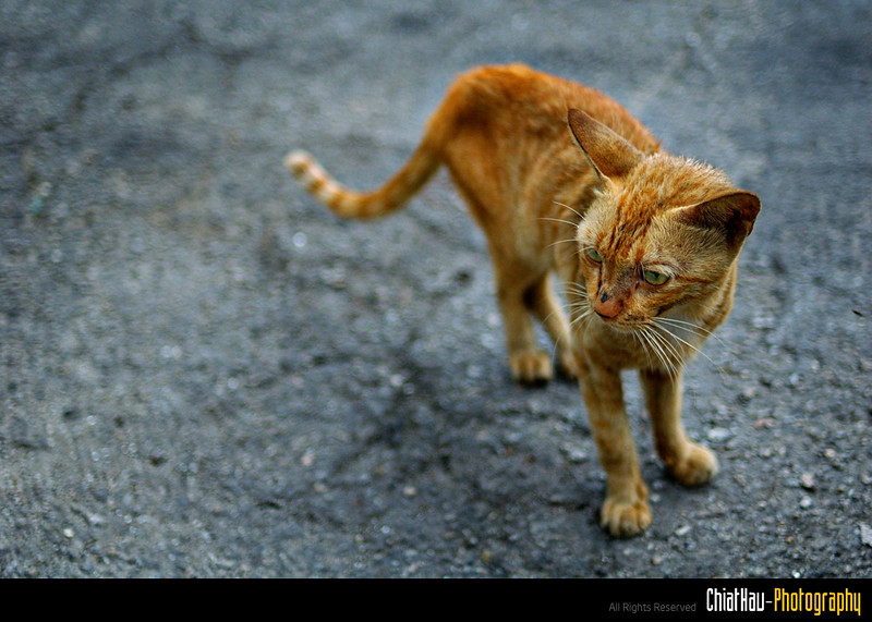 Another skinny kittie... wondering...