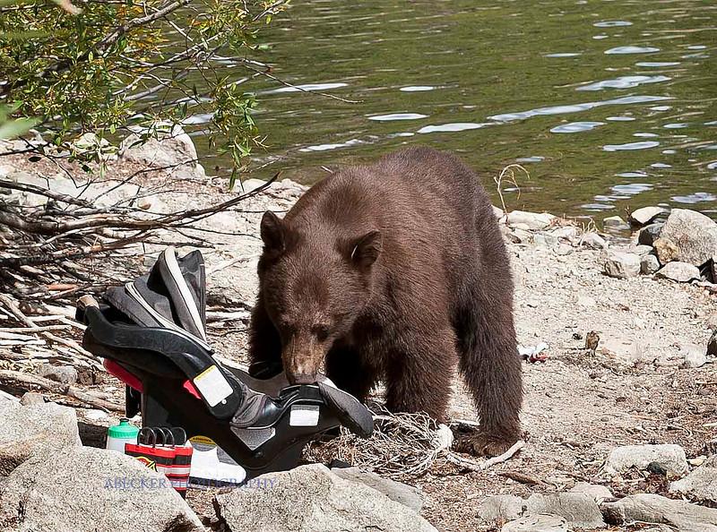 A Bear 1.jpg
