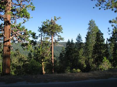 White Mountain '08