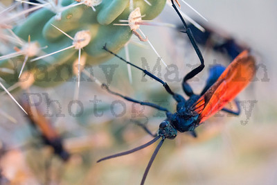 Insects & other Arthropods! - Stock Photos