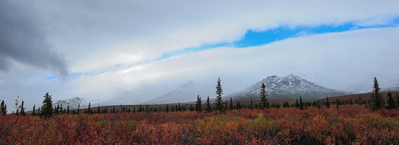Denali Area,Early September, 2014