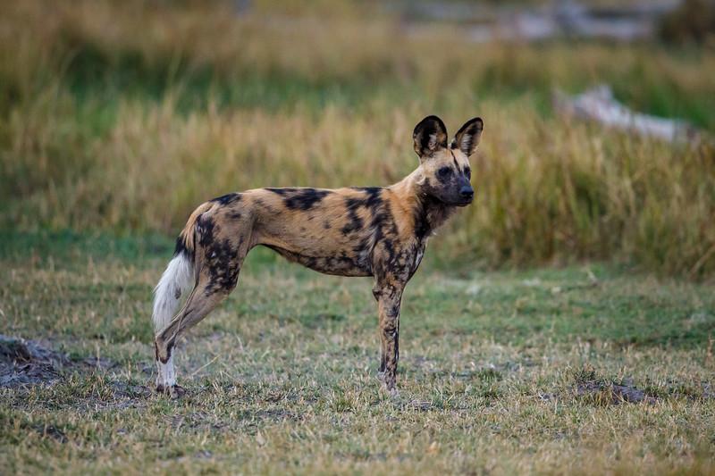 Botswana_0818_PSokol-1634.jpg