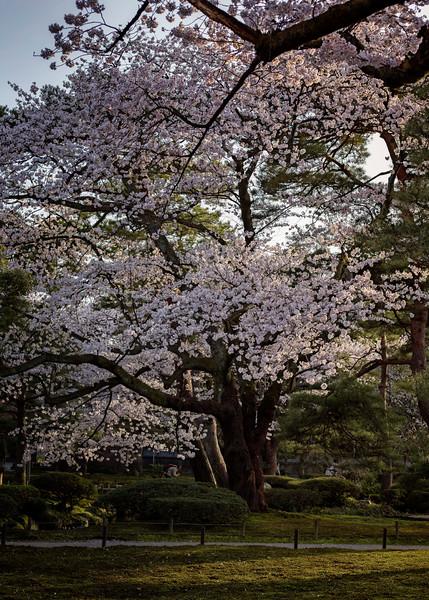 Kanazawa 080413 14.jpg