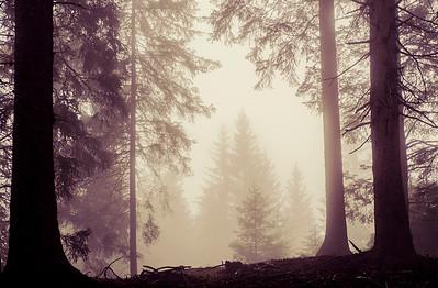 Fog This Thing