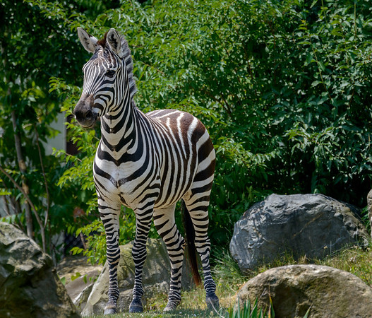 Cleveland Metroparks Zoo June 2014