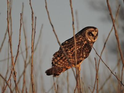 B.K. Leach Conservation  - Elsberry, MO.  1.16.2016