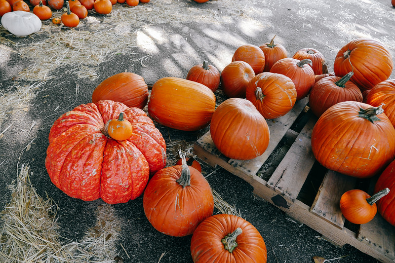 assorted pumpkins 1 (1 of 1).jpg