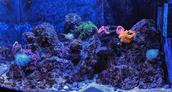 2019-08-05 - Reef Tank Update