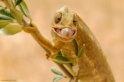 Frogs & Reptiles