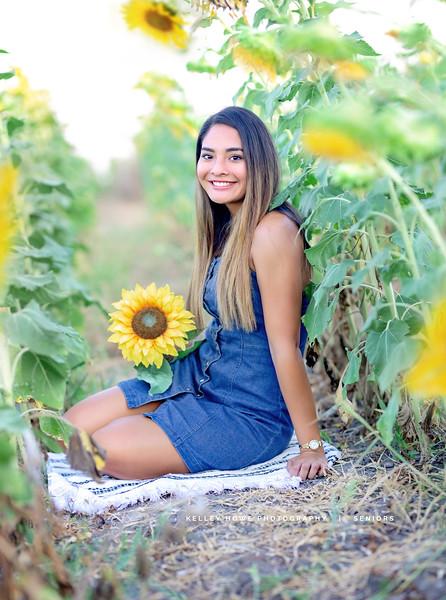 Sunflower 0781.jpg
