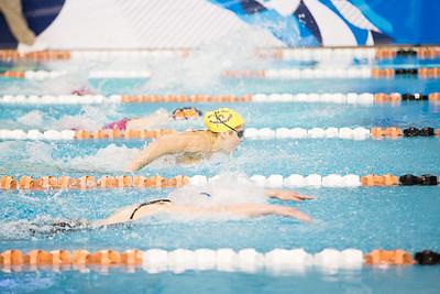 arena pro swimming
