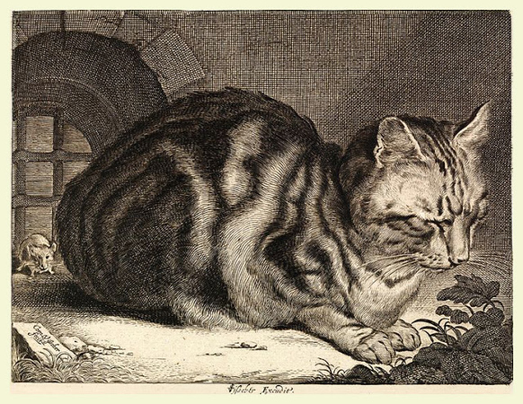 1657 Cornelis de Visscher The Large Cat etching and engraving 14.3 x 18.4 cm.jpg