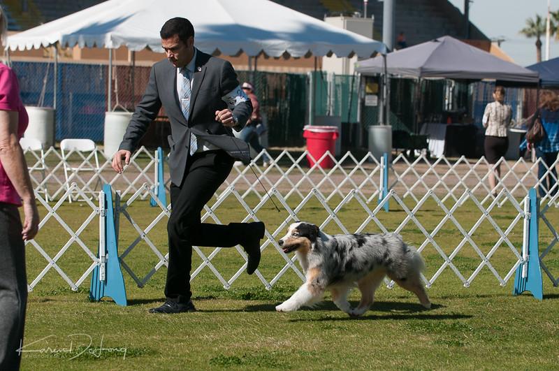 20170205_Australian Shepherds_Lost Dutchman Kennel Club-152.jpg
