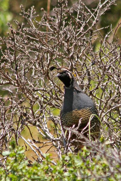 Marin Birds