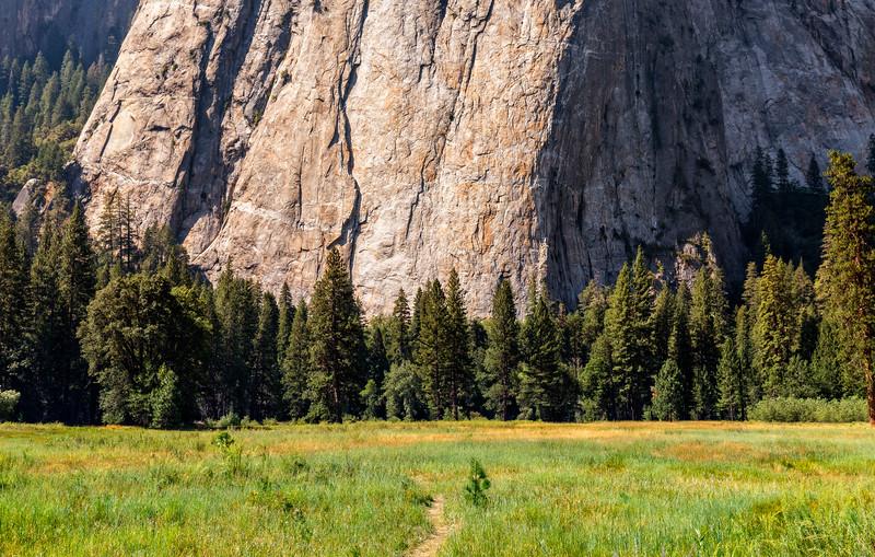 Yosemite Valley Meadow - Color-.jpg
