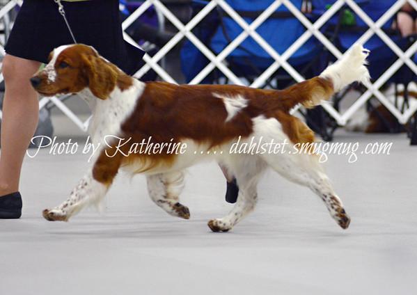 WSSCA 2016 - Class Dogs