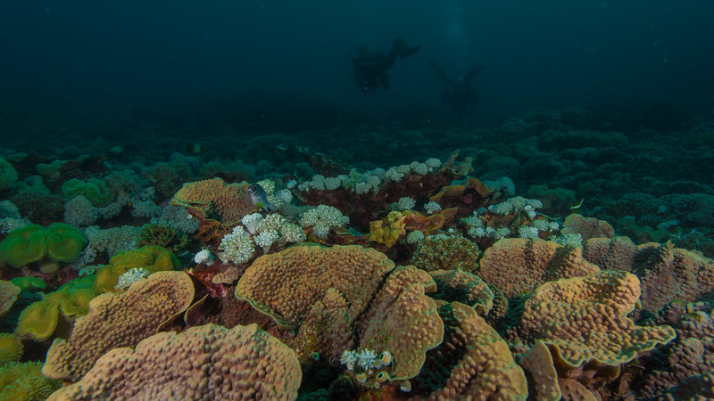 Taken at Hol Sulamadaha divesite in Ternate Island, North Maluku, Indonesia during our 8D7N excursion in March 2018