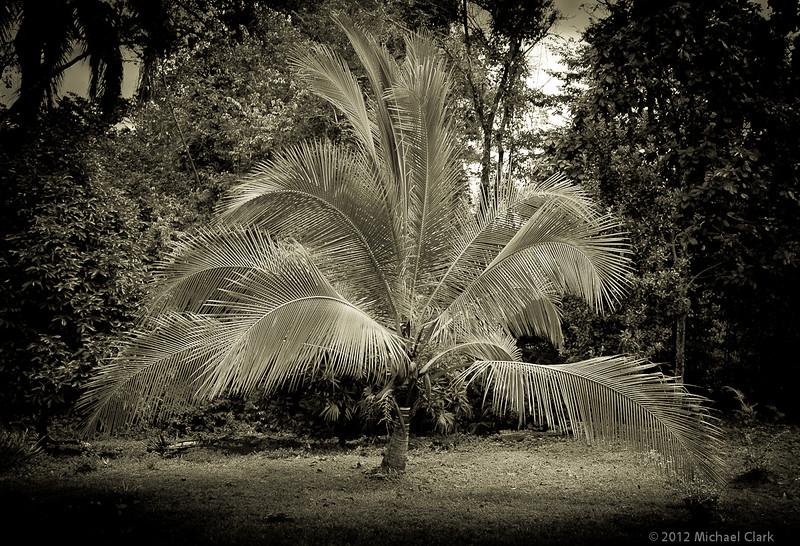 Panama 2012-97.jpg