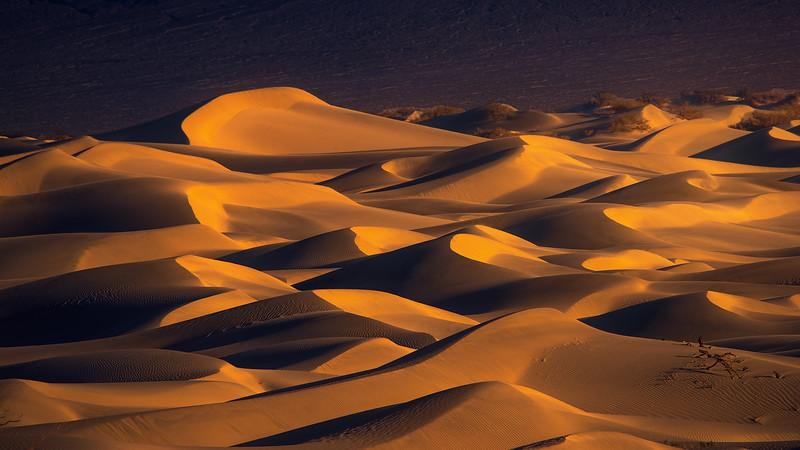 Dune1 Full.jpg