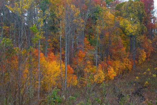 Fall 2008_11_15