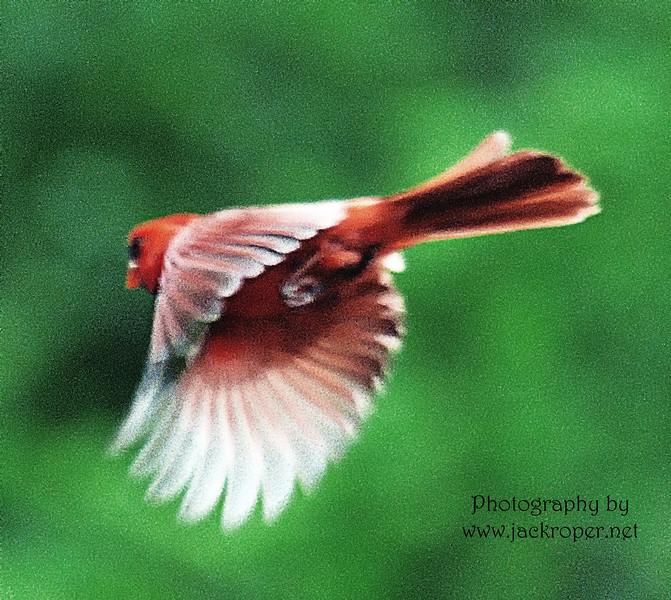 Cardinal best 5109.jpg