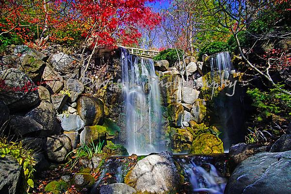 Anderson Japanese Garden 11/5/2020