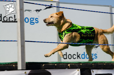 2013 Puget Sound Dockdogs