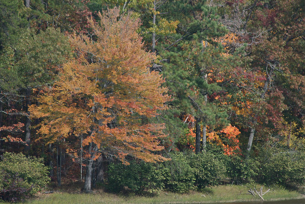 Fall Scenes in Alabama