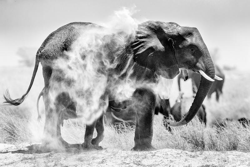 Andrew Beck Chobe Elephant.jpg