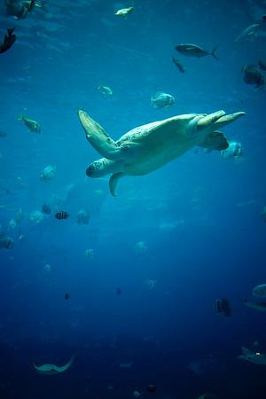 Altanta aquarium
