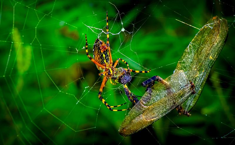 Spiders-Arachnids-004.jpg