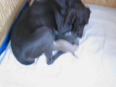 Ashley's Puppies
