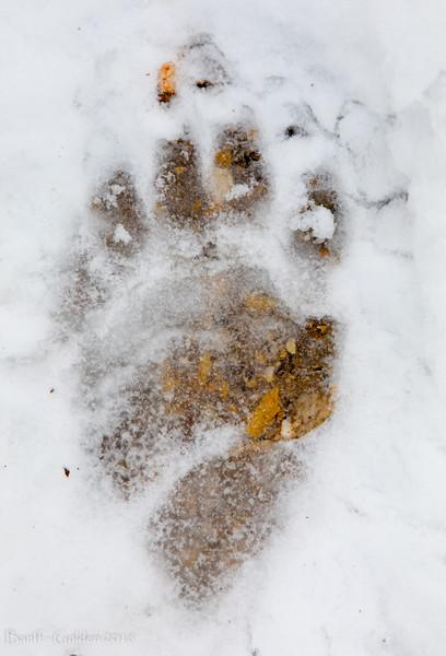 Banff-Golden-20180915-031.jpg