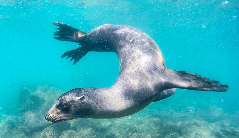 Sea Lion 1-2.jpg