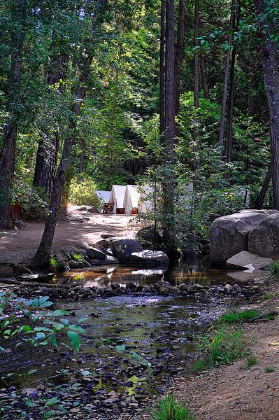 forest camp 9-15-2009.jpg